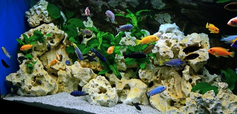 Pin Malawi Aquarium Met Rock Zolid Wand on Pinterest